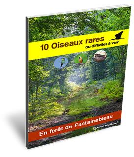 10 oiseaux rares de la forêt de Fontainebleau - ebook