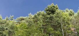 Plaine de Chanfroy - Forêt de Fontainebleau