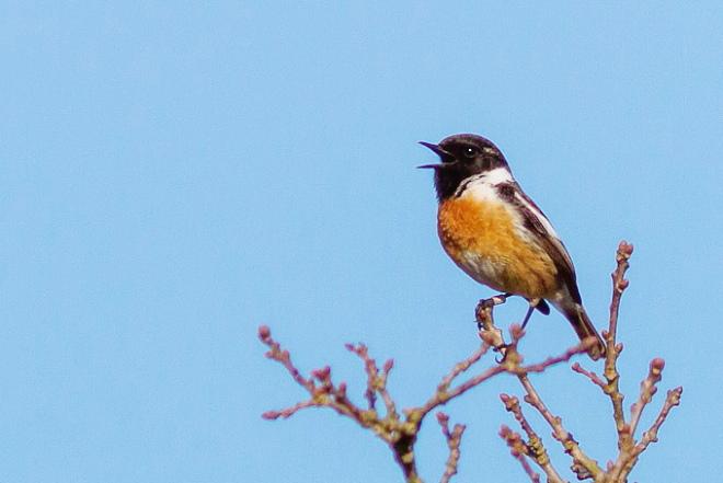 Les chants d 39 oiseaux comment les reconnaitre - Comment faire fuir les oiseaux ...