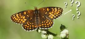 Guide d'identification sur les papillons