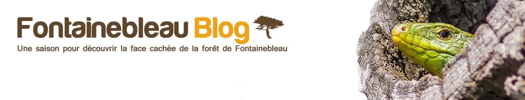 Fontainebleau Blog  – Faune | Flore | Insectes