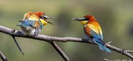 Oiseaux insectivores de la forêt de Fontainebleau