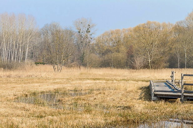Espace naturel sensible du marais d'Épisy (77)
