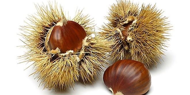 Chataigne Image la châtaigne sauvage - cueillette, conservation, cuisson
