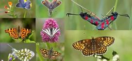 Inventaire de la faune de la forêt de fontainebleau