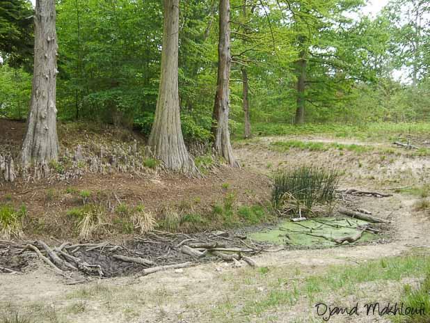 Mare aux cerfs lors de la sécheresse de 2010