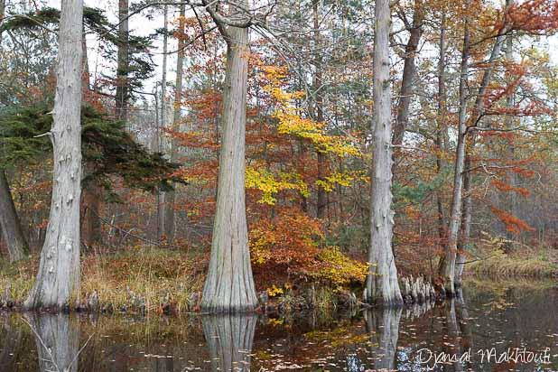 Mare aux Cerfs en automne - Forêt de Fontainebleau