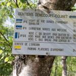 Sentier Denecourt n°6 - Forêt de Fontainebleau