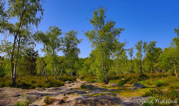 Platière des Gorges d'Apremont - Forêt de Fontainebleau