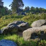 Paysage rocheux d'Apremont - Forêt de Fontainebleau