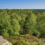 Vue des Gorges d'Apremont - Forêt de Fontainebleau