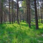 Sous bois d'Apremont - Forêt de Fontainebleau