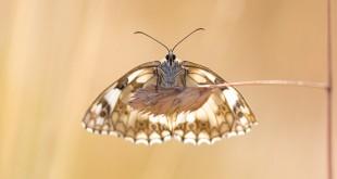 Comment photographier les papillons ?