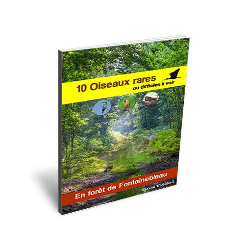 10 Oiseaux rares ou difficiles à voir en forêt de Fontainebleau