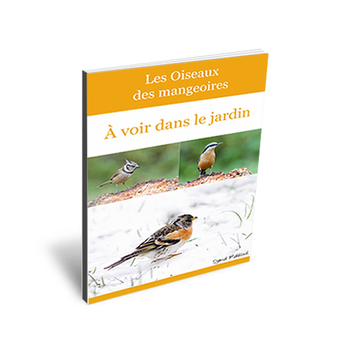 Oiseaux des mangeoires à voir au jardin - Ebook