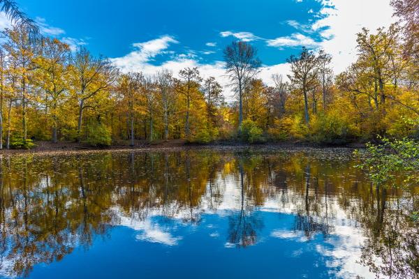 Mare aux Evées - Promenades en forêt de Fontainebleau ?