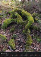 curiosite-et-paysage-de-la-foret-de-fontainebleau-4