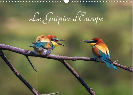 Guêpier d'Europe - Calendrier photos sur Merops Apiaster
