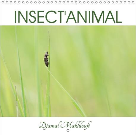 Insect'Animal - Portrait d'insectes qui peuplent nos forêt et prairies