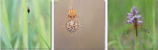 Galeries de portrait d'insectes étonnants