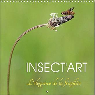 Insect'Art - L'élégance de la fragilité - Calendrier sur les insectes
