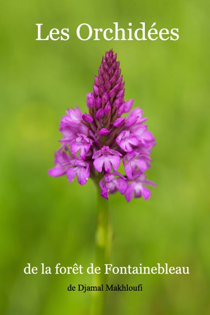 Orchidées de la forêt de Fontainebleau - eBook