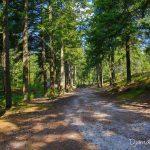 Route de l'ermitage - Forêt de Fontainebleau