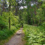 Chemin des gorges de Franchard
