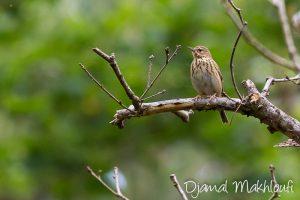 Oiseau de la forêt de Fontainebleau