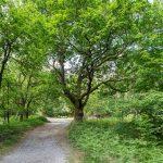 Promenade buccolique à l'ombre de la forêt de Fontainebleau