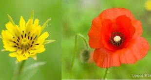 Fleurs sauvages de mai juin