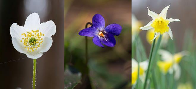 Fleurs sauvages de mars et avril