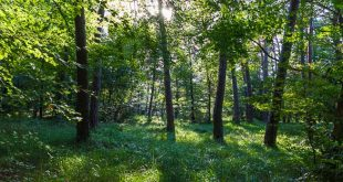 Promenades en forêt de Fontainebleau