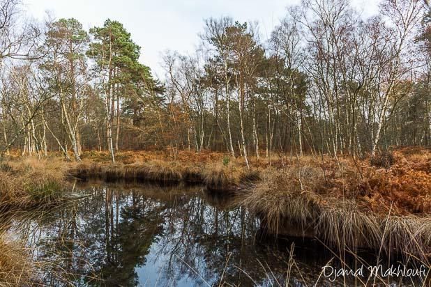 Mare à Dagneau - Photo forêt de Fontainebleau