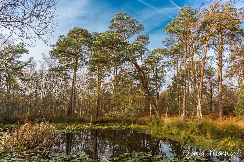 Mare à Piat - Photo forêt de Fontainebleau