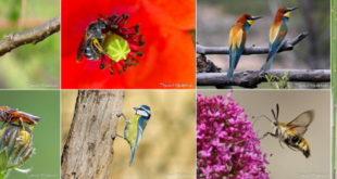 Biodiversité de la forêt de Fontainebleau