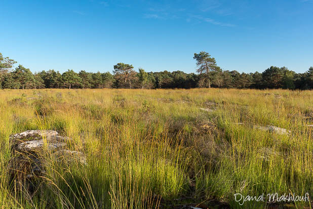 Platière de l'Occident - Forêt de Fontainebleau