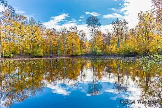 Mare aux Évées - mares de la forêt de Fontainebleau