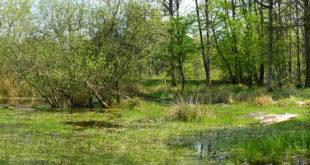 Mare d'Occident - Mares de la forêt de Fontainebleau