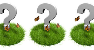 Comment identifier les Nacrés papillons ?
