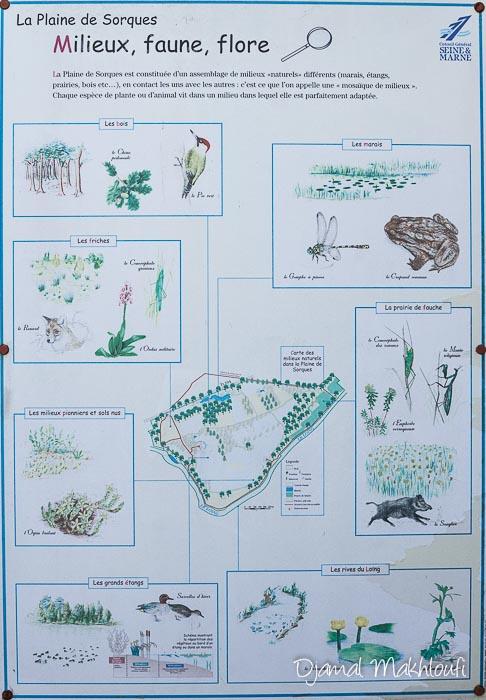 Panneau d'affichage de La Plaine de Sorques (Milieux, faune, flore)