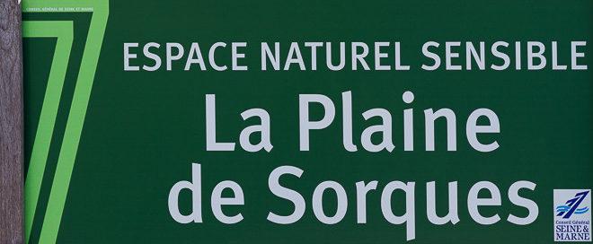 ENS de la plaine de Sorques - Montigny sur Loing