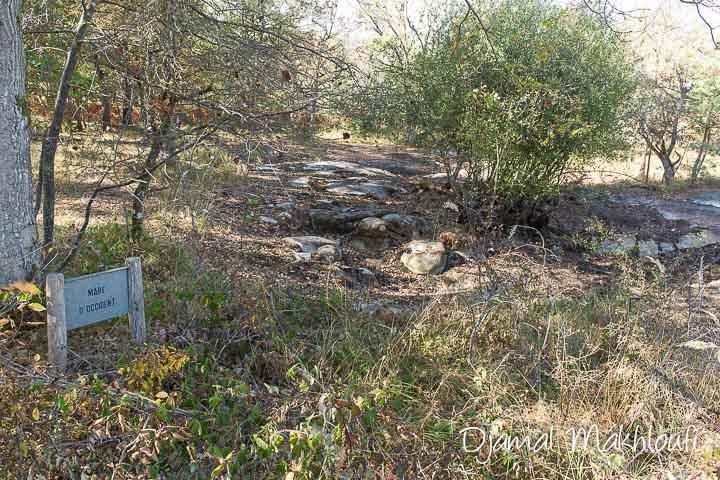 Sécheresse de l'été 2018 - forêt de Fontainebleau