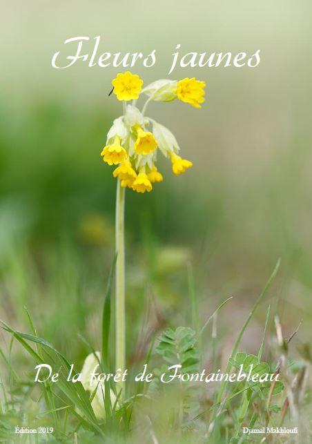 Fleurs jaunes sauvages eBook - Printemps/été (Bois | Forêt)