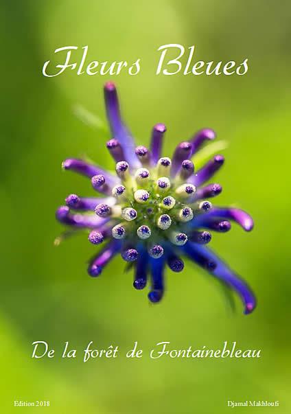 Raiponce orbiculaire - Fleurs bleues sauvages - Bois et forêt - eBook