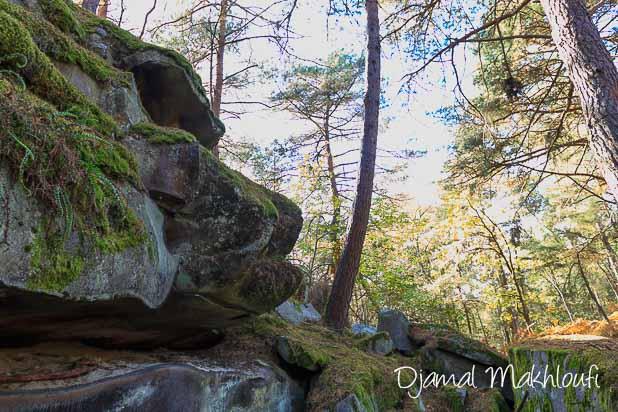 Animal bizarre - La Roche qui parle (forêt de Fontainebleau)