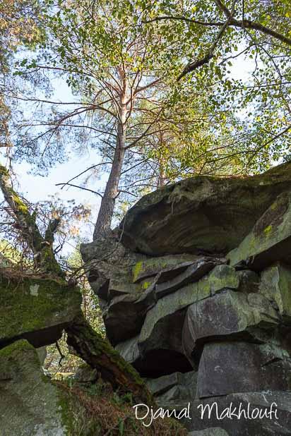 Symbiose végétale et minérale - La Roche qui parle (forêt de Fontainebleau)