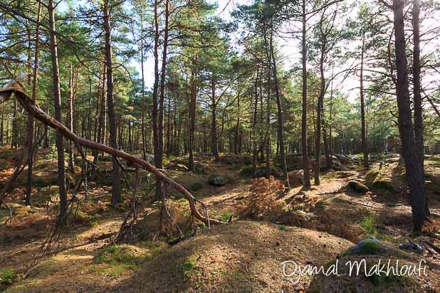 Plateau lunaire - La Roche qui parle (forêt de Fontainebleau)