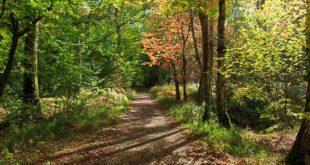 Balade en forêt de Fontainebleau