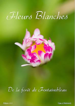 eBook Fleurs blanches sauvages - Djamal Makhloufi